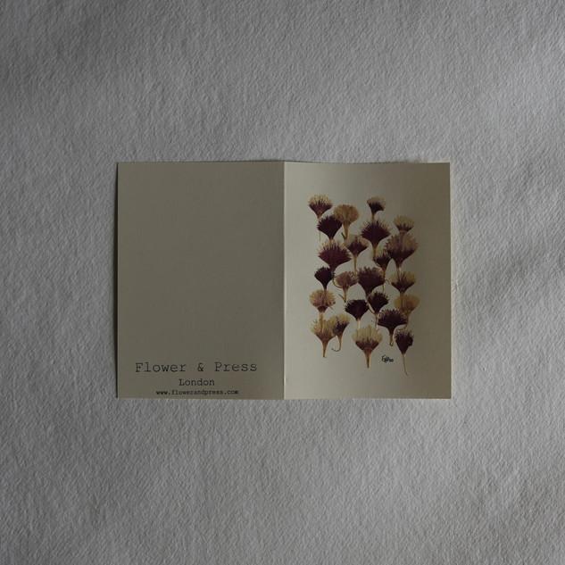 Sweet william petals