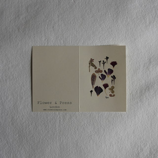 Scabious, fritillary, ranunculus and hydrangea petals