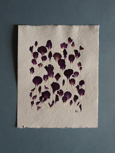 Purple carnation petals