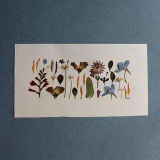 Crocosmia, Dahlia, Lizzie, Delphinium, Astrantia, Dill and Fritillaria Petals