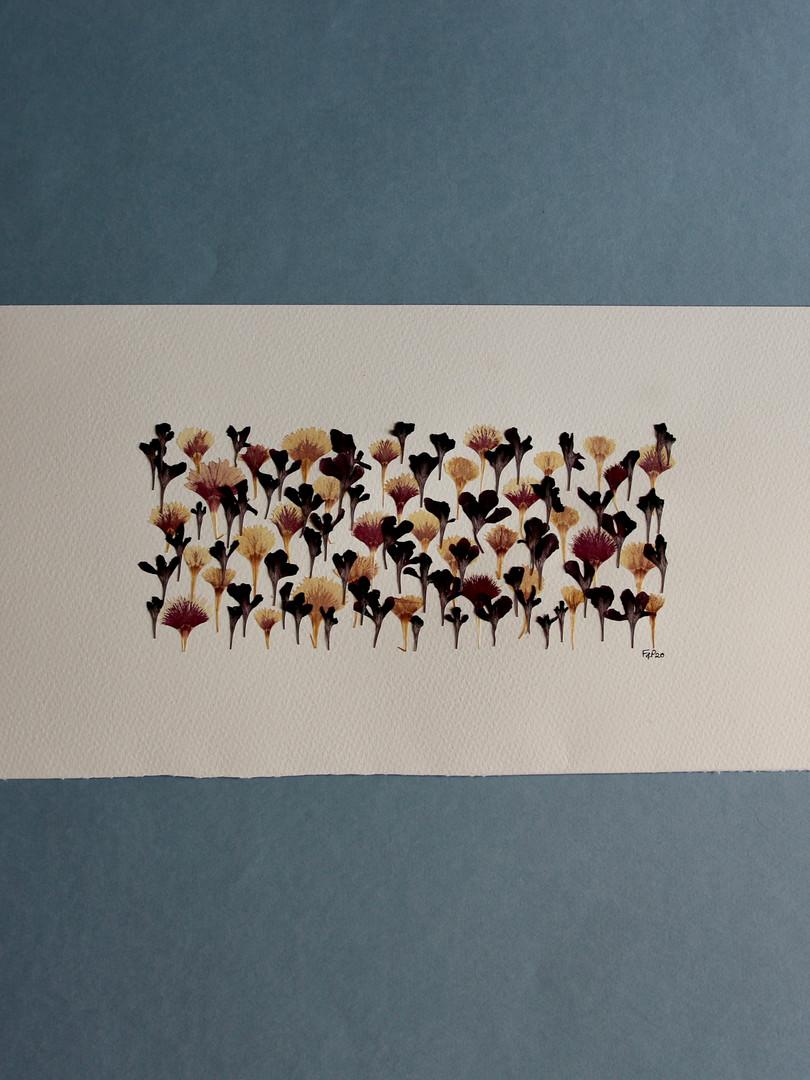 Scabious and Dianthus Petals