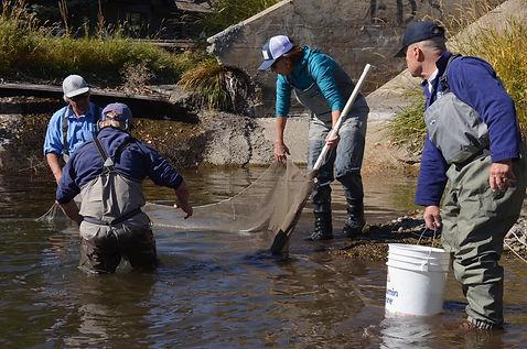 2019 Gannett Rd. canal fish rescue.jpeg