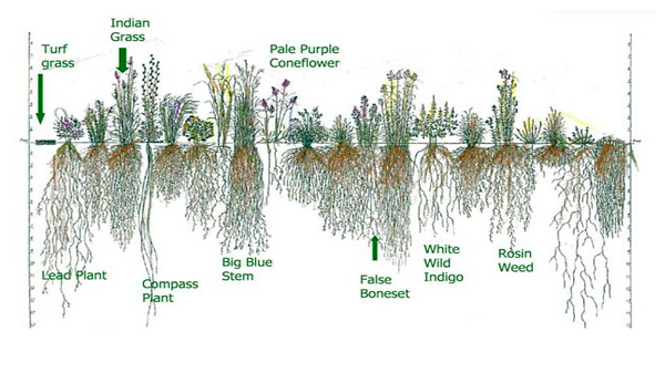 Plant roots.png