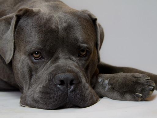 A Dog, his sleep and his dog bed
