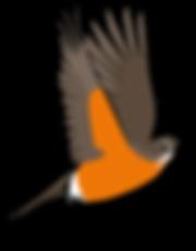 3586-Robin-Character-Poses-4_09.png