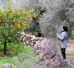 Discovering hidden orange trees