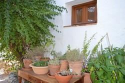 The organic herb corner