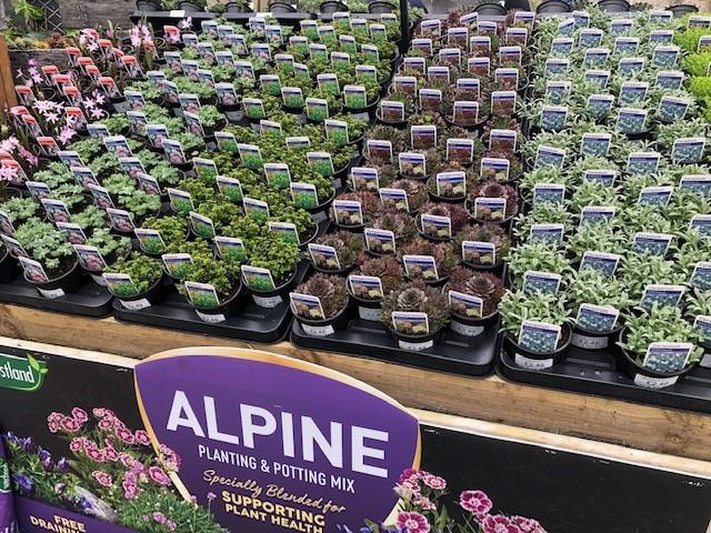 Alpines.jpg