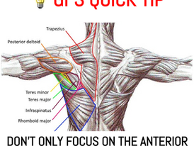 GFS Quick Tip #16: Don't limit training to anterior muscles