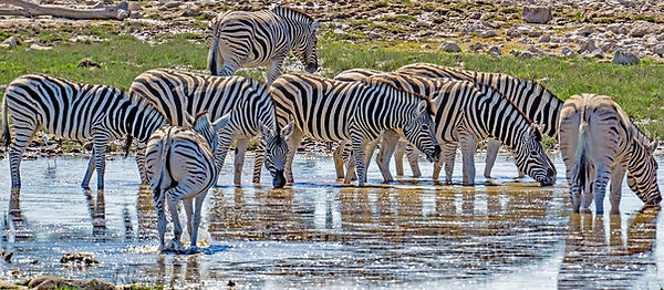 namibia-5239549_1920.jpg