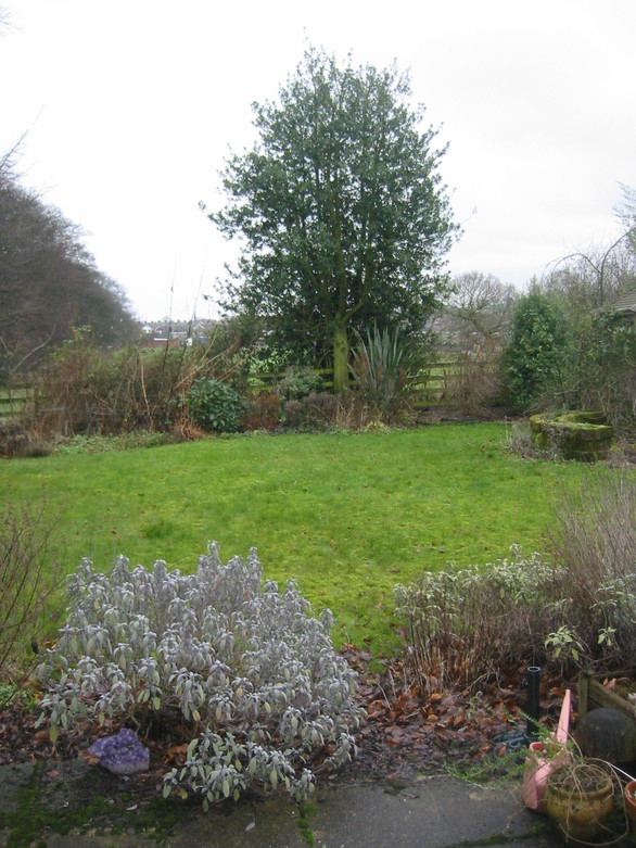 Back Garden Before Earthworks GardenDesign