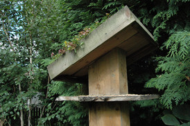 """Modernist"" Bird Table with Green Roof"