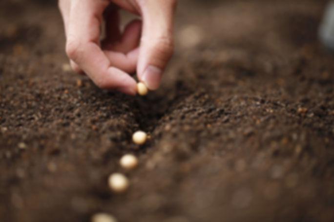 seeds%20(GOOGLE%20IMAGENS).jpg