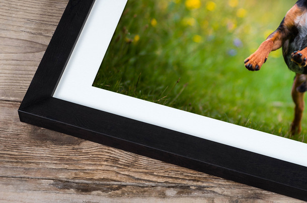 Rooster frame 2.jpg