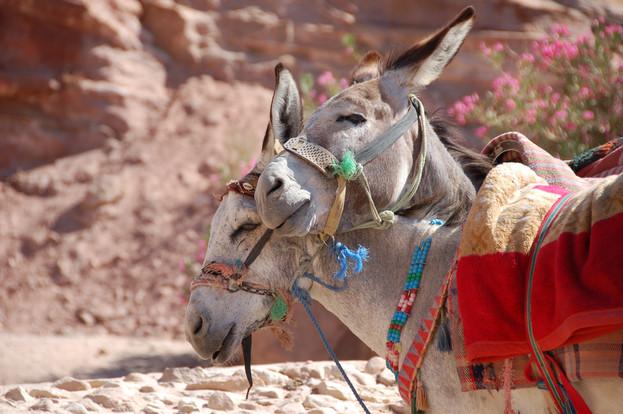 verliefde ezeltjes jordanie