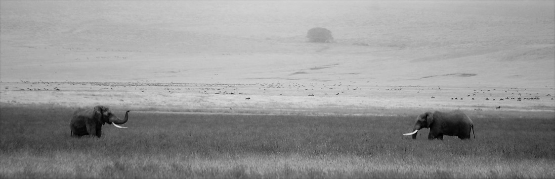 olifantjes zwart wit