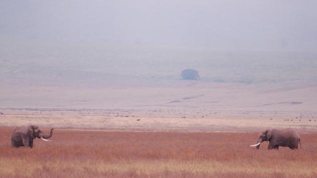 olifanten nogoro krater kenia