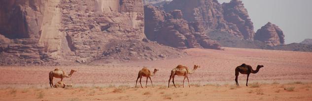 kamelen wadi rum woestijn jordanie
