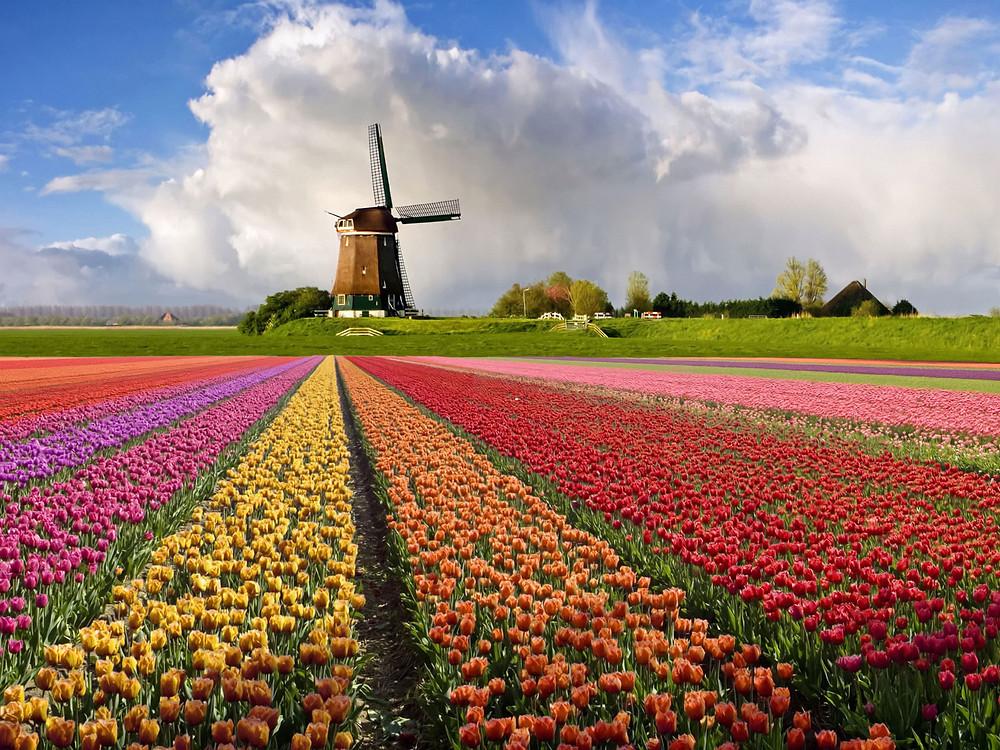 exportar flores