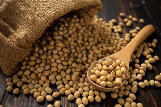 exportar soja