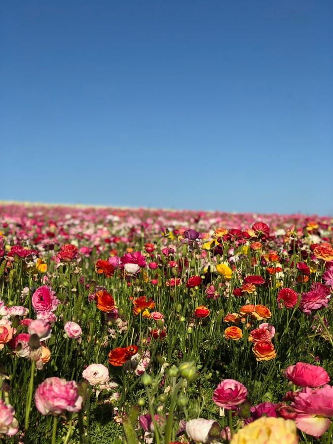 importação de flores