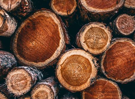 Quer exportar madeira? Saiba as perspectivas do setor e como a Domani pode ajudar