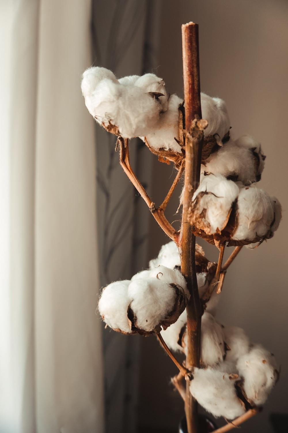 como exportar algodão