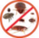 ot-kleschey-ot-komarov-ot-muravev-ot-klo