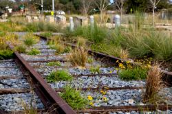 rail-and-wildflowers-Matt-Dube.png