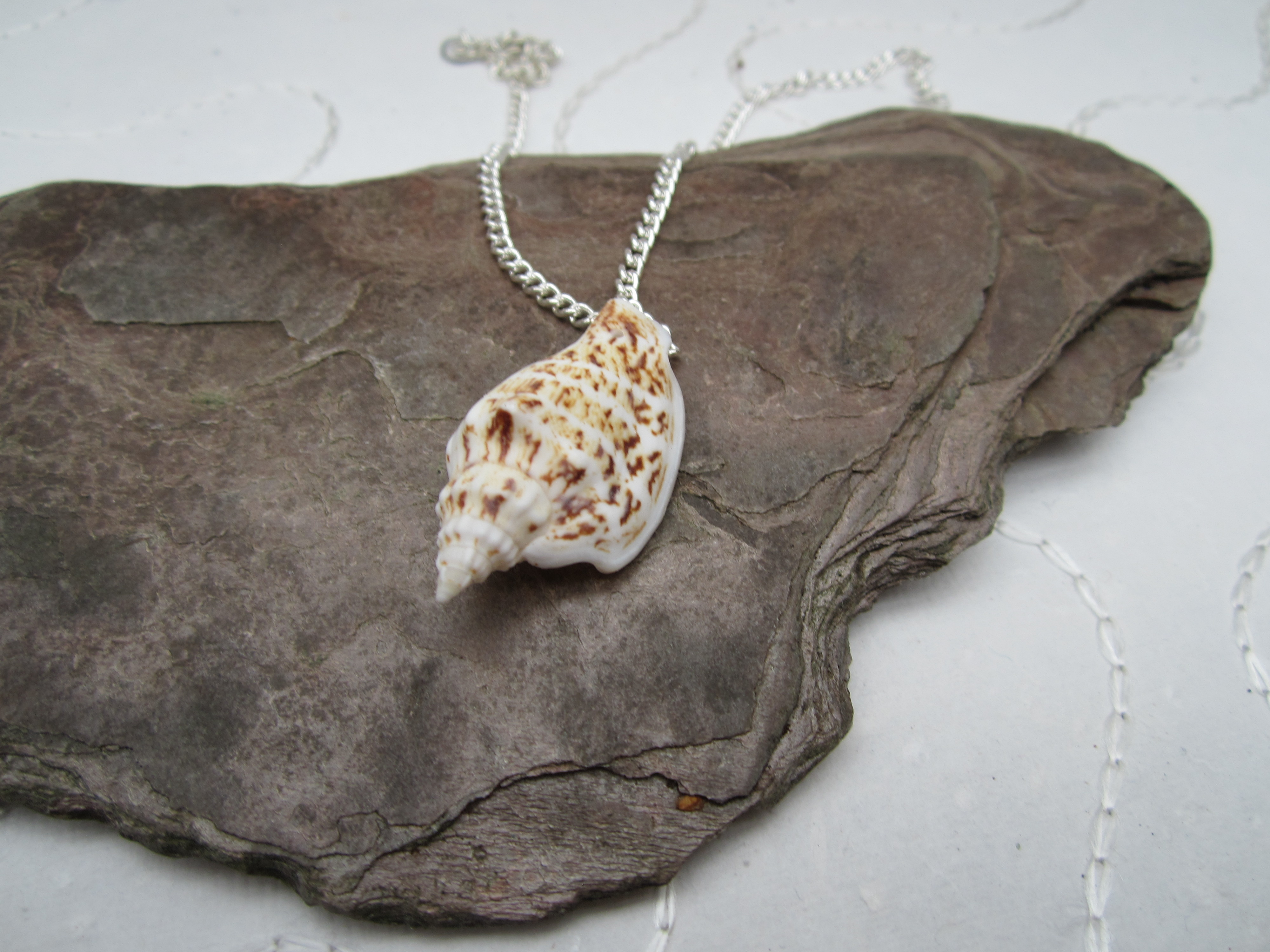 No.1 Shell pendent