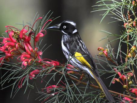 Songbirds like it sweet!