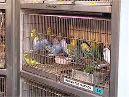 """Les Animaleries, des oiseaux pas si """"bêtes"""""""