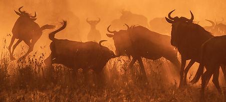 natural history-2.jpg