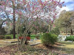 Old St Andrew's Graveyard 3/2017 4