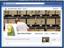 "West Sydney Budgie ""LIKES"" Facebook"