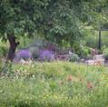 second year of wildflower meadow growing
