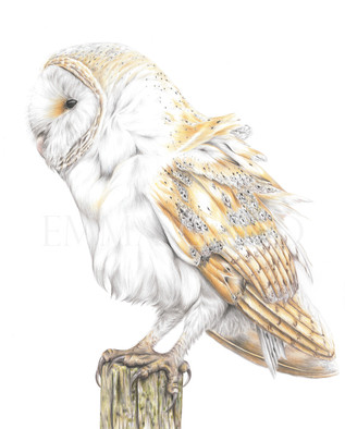 Barn Owl - Sold