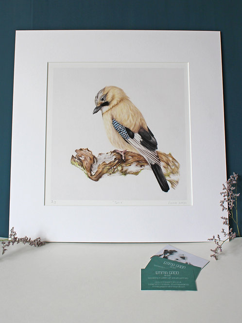 'Jay' Limited Edition Giclee Print