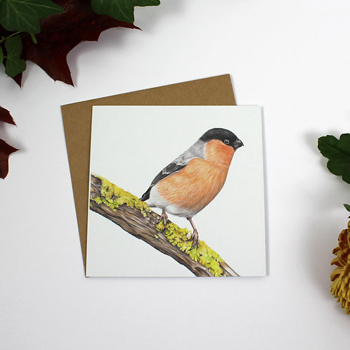 Garden Bird Greeting Card Bundle