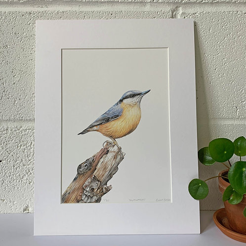 'Nuthatch' Limited Edition Giclee Print
