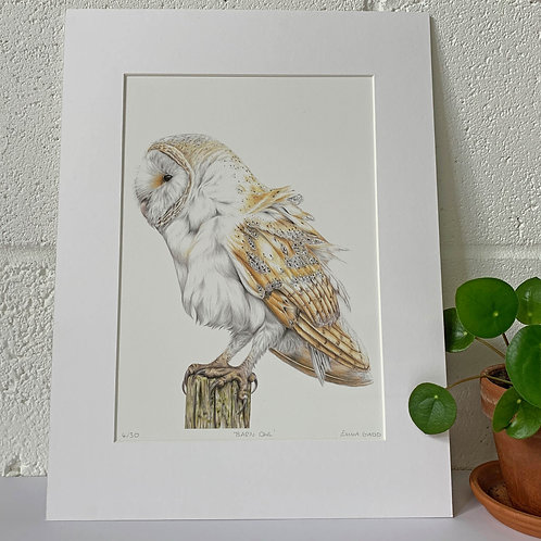Barn Owl Limited Edition Print