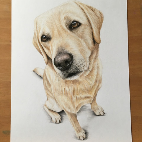 Buster - A4