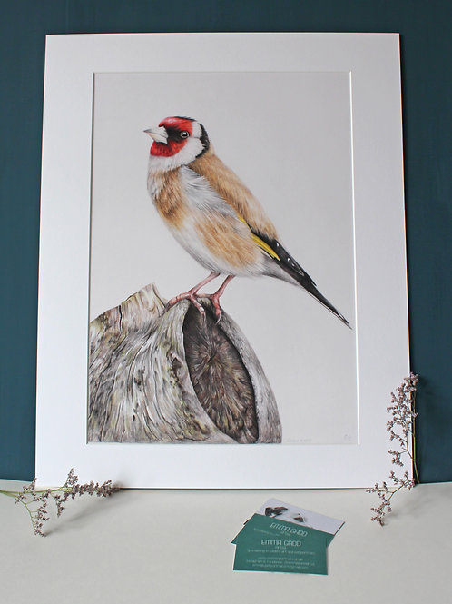 A3 'Goldfinch' Limited Edition Giclee Print
