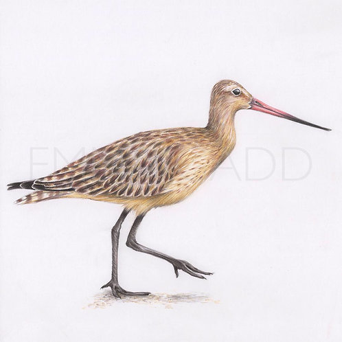 'Bar-Tailed Godwit' Original