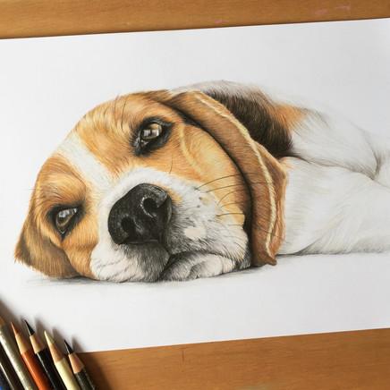 Beagle - A4