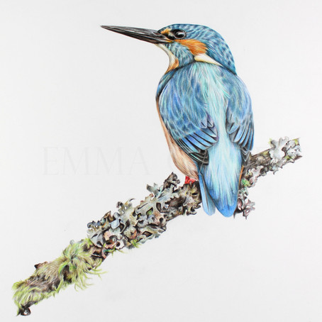 Kingfisher - Sold