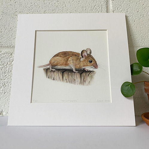 'Mr. Whiskers Print'