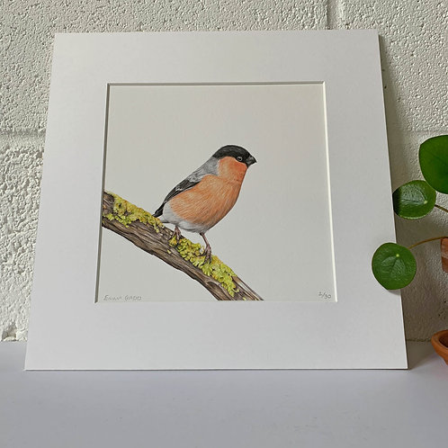 'Bullfinch' Limited Edition Giclee Print