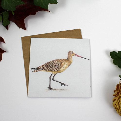 Bar Tailed Godwit Greeting Card