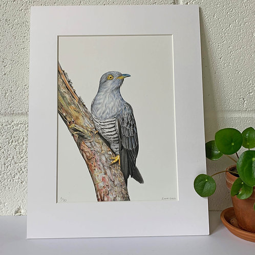 Cuckoo Limited Edition Print